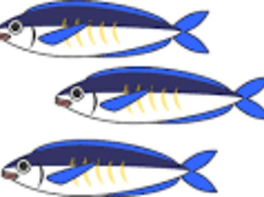 <お魚ラボ!>三枚おろし×豪華パーティ料理の画像