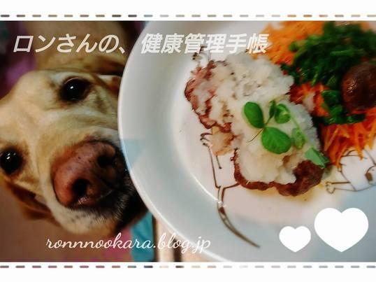 愛犬・愛猫ごはん50度洗い料理講座 会場☆ロンさんの、台所の画像