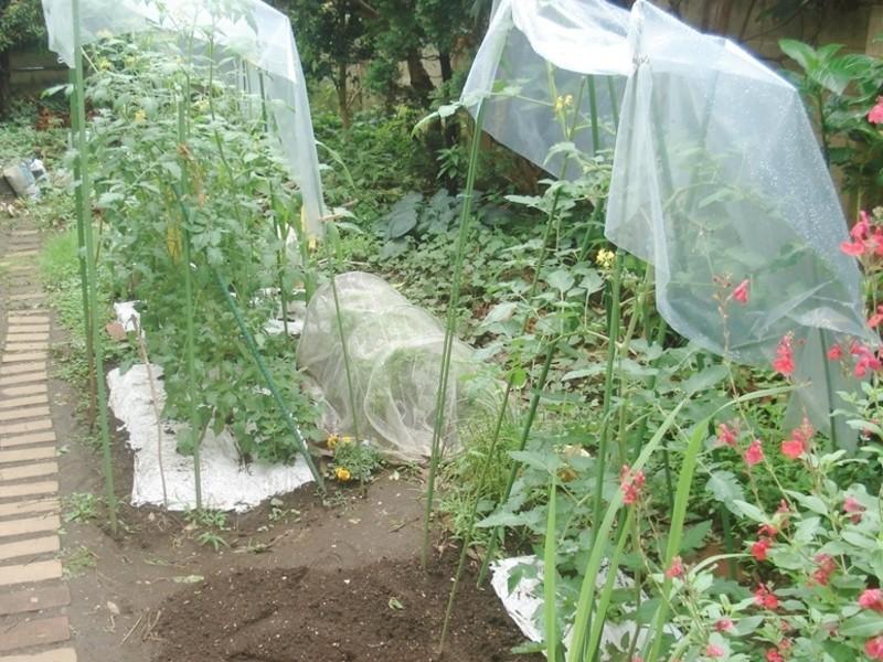 自然にやさしい家庭菜園作りの勉強会の画像