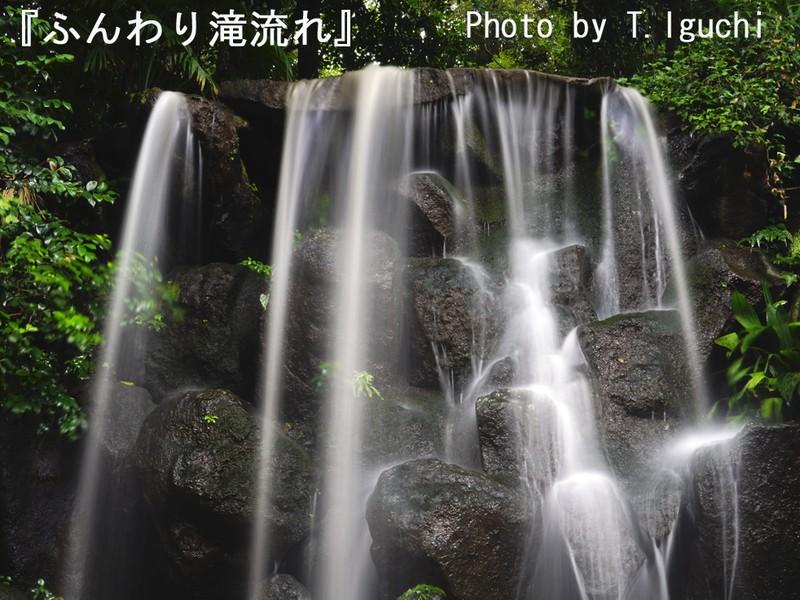 【ふんわり・滝流れ】&【リズミカル・玉ボケ】を撮る!<三脚指南付>の画像