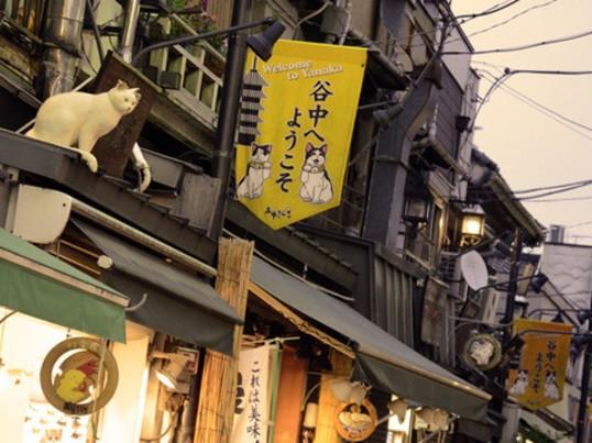 ♬スキップ☆スナップ in東京 《谷根千》のんびりフォト散歩♫の画像