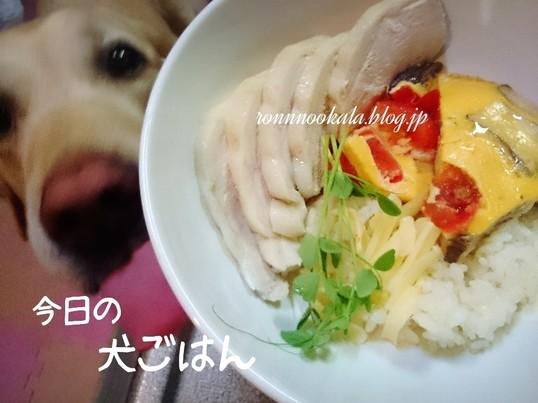 【ペット食育入門講座+50度洗愛犬・愛猫料理講座】の画像