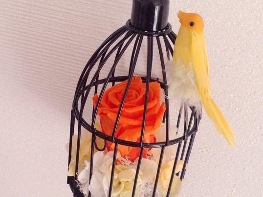 【福岡│久留米】*♪*プリザーブドフラワー鳥かごアレンジ体験*♪*の画像