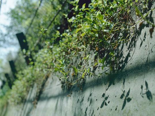 鎌倉の小路を巡りながらマンツーマンで学べる写真撮影教室の画像