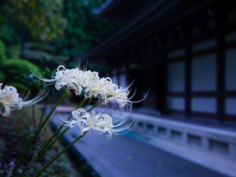 マインドフル・フォトウォーク in 鎌倉の画像