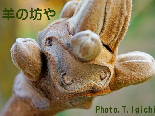 冬のアウトドア・マクロ撮影入門【葉痕ファンタジーを撮る♫】の画像