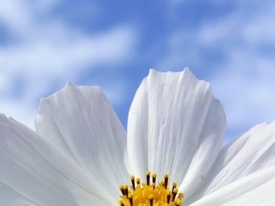 【旬の生花で1dayレッスン】1月限定ホワイト&ホワイトアレンジの画像