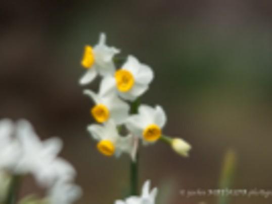 春を先撮り! 新春の花を撮影しよう!の画像