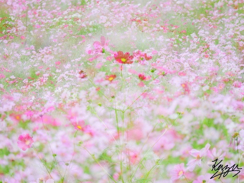 ① 横浜写真教室『たった2時間で基礎からマニュアル操作まで』の画像