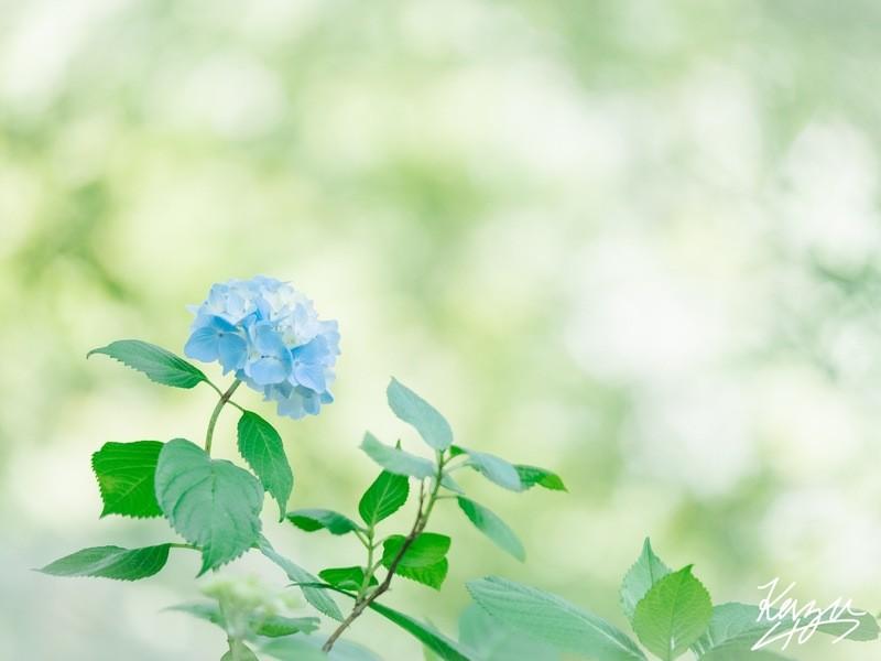 ② 横浜写真教室『色彩を柔らかくする写真講座〜初級〜』の画像