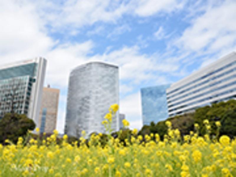朝写ん歩レッスン☆浜離宮で菜の花とビル群を撮ろうの画像