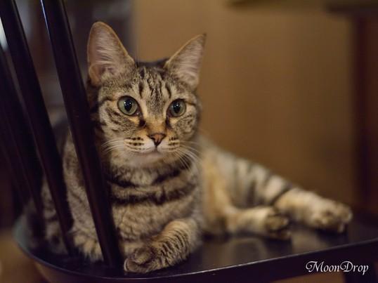 お写べりレッスン☆猫カフェ貸切り 猫ちゃんをじっくり撮影しよう!の画像