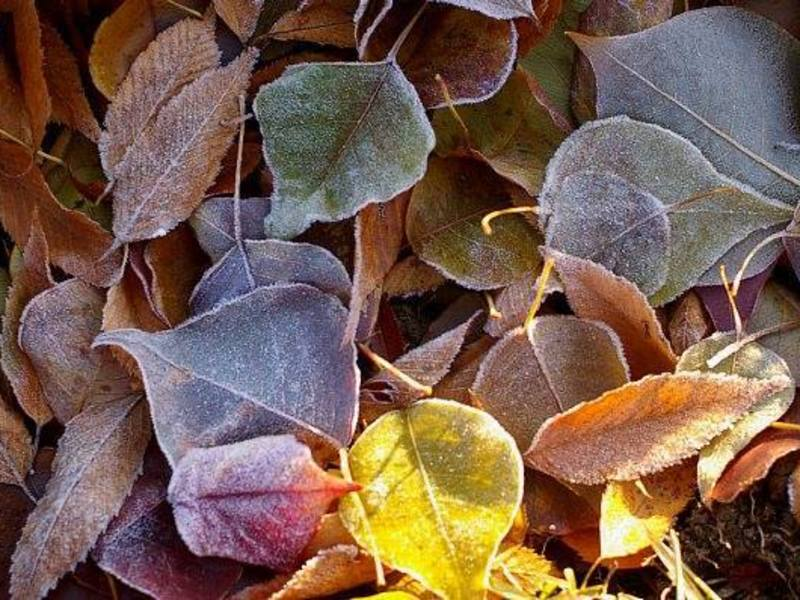 【古民家で陰ヨガ】秋のディープリラクゼーション(文京区・巣鴨)の画像