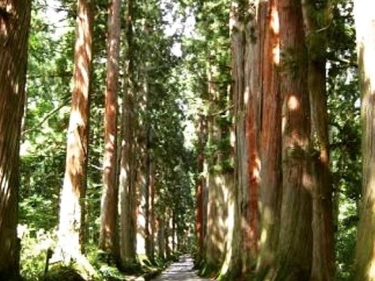 パワースポット戸隠宿坊に泊まる自然にふれるヨガリトリート in長野の画像
