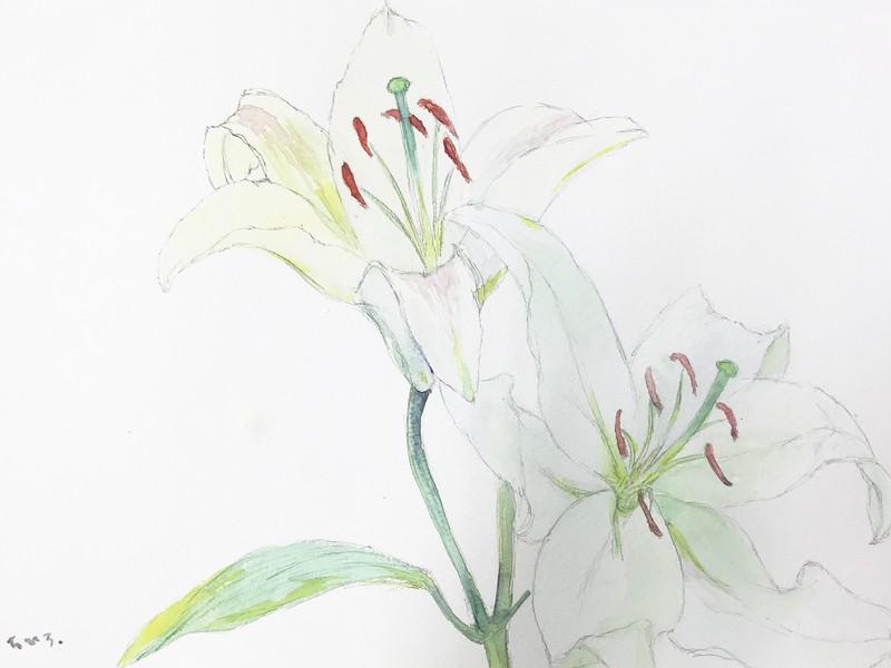 花の水彩画〜日本画材の顔彩で描こう〜の画像
