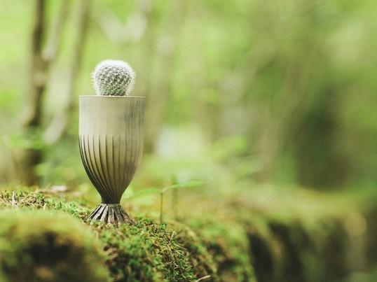空き缶とラミエーラでミニ植物鉢を作ろう!の画像
