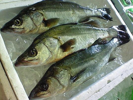 夏の旬魚をさばいて美味しく食べましょう(^-^)の画像