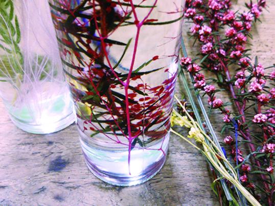 ハーバリウム ~【植物】という生物の標本づくり~※sold outの画像