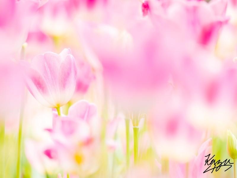 ③ 横浜写真教室『色彩を柔らかくする写真講座〜中級〜』の画像