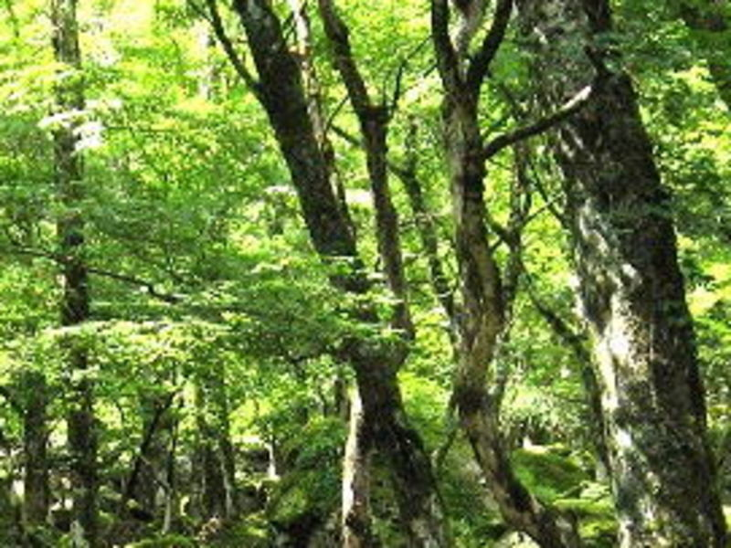 化学で読み解く。こだわりの和精油と蒸留水【三重県 宮川森林組合】の画像