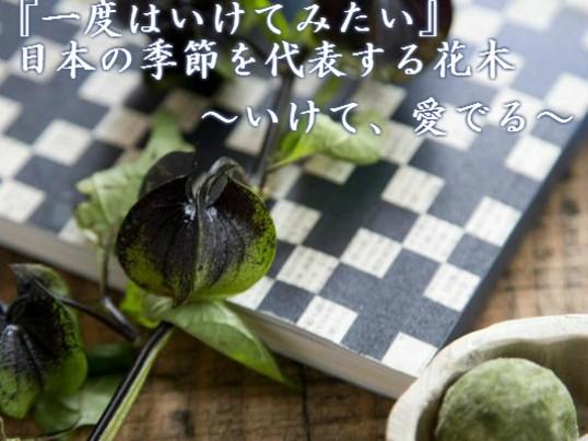 """『一度はいけてみたい』日本の季節を代表する花木~""""いけて、愛でる""""の画像"""