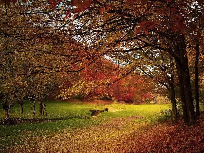 【秋だけの特別撮影会】さあ、紅葉の山梨・甲斐路を撮りに行こう!の画像