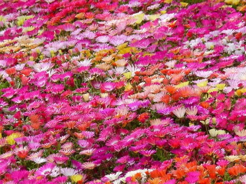 """""""あなたの腸にお花を咲かせます""""の画像"""