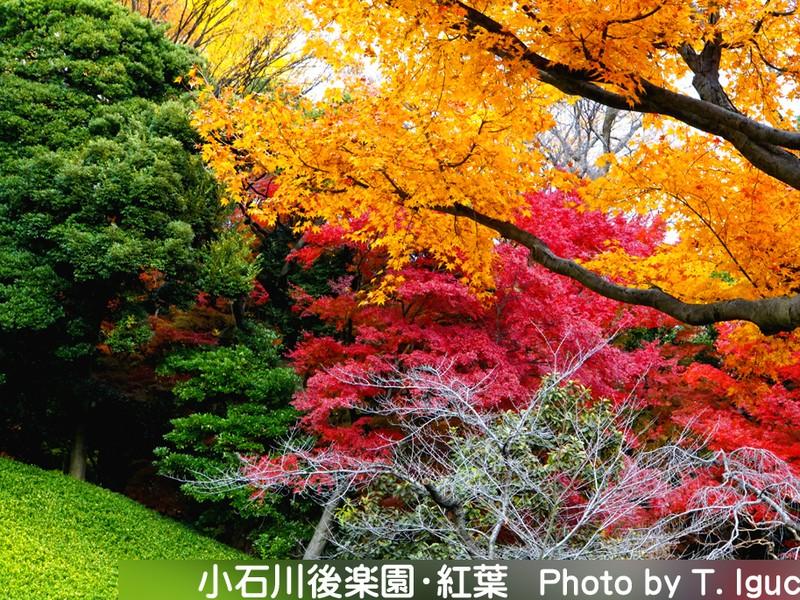 日本庭園の紅葉を極める撮影会〔小石川後楽園〕《ミニ講評付》の画像