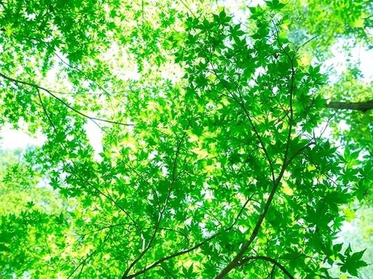 【初心者の方大歓迎】癒しのヒーリングヨガの画像