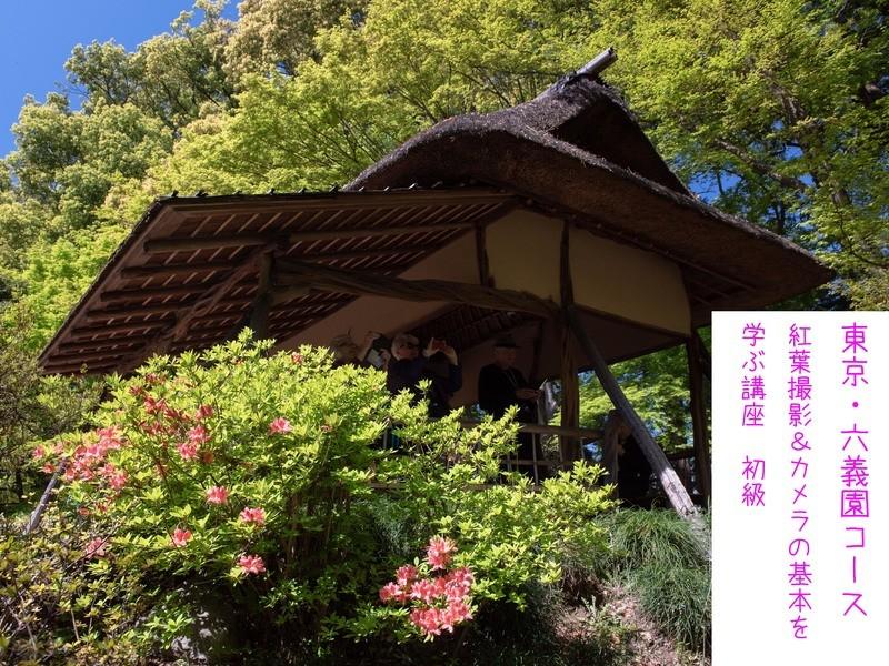 <東京六義園コース>初級 紅葉撮影&カメラの基本を学ぶ講座の画像
