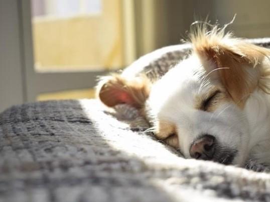 【リニューアル!】回復力を高める睡眠セミナーの画像