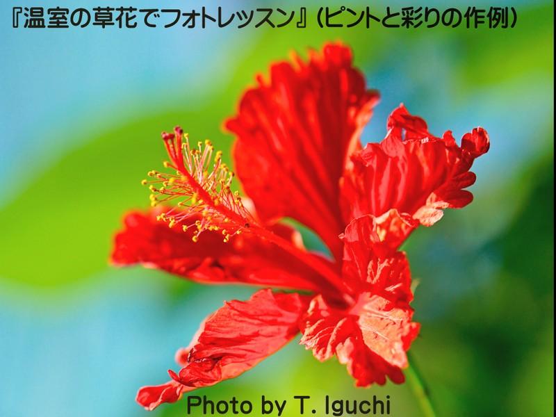温室の草花でフォトレッスン【前ボケ・後ボケ&露出補正を学ぼう!】の画像