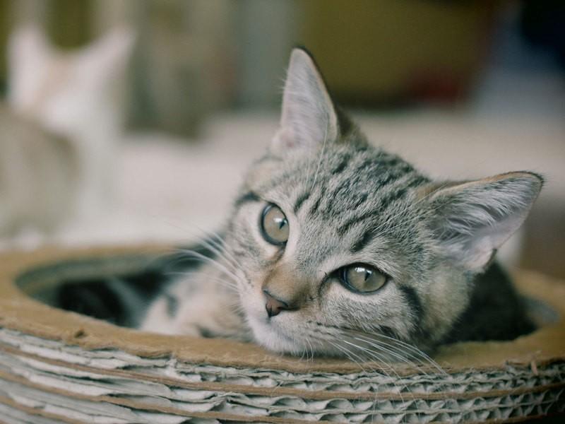 ペトグラファーが教える愛猫写真の撮り方教室ですの画像
