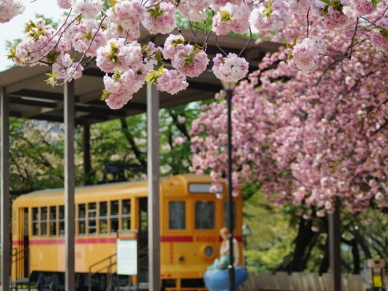 初歩の初歩の江戸教室 飛鳥山公園の画像