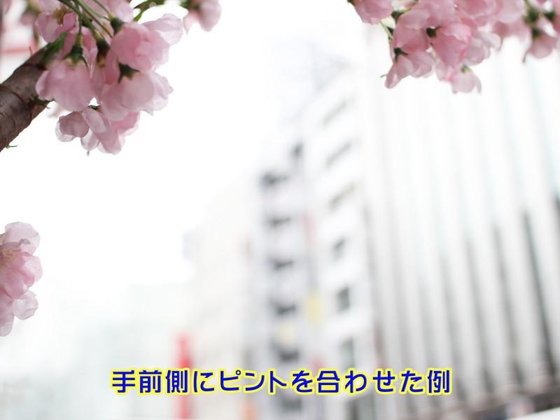 ■キヤノン一眼レフ限定[座学]初心者のカメラ[フォーカスロック編]の画像