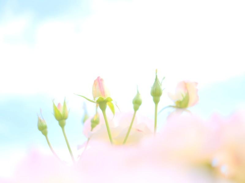 チャレンジ ゆるふわフォトライフ【90分】の画像