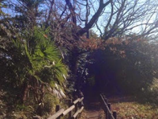 都心から20分でリラックス ~癒されまちの森歩き ヨガ&温泉付き~の画像