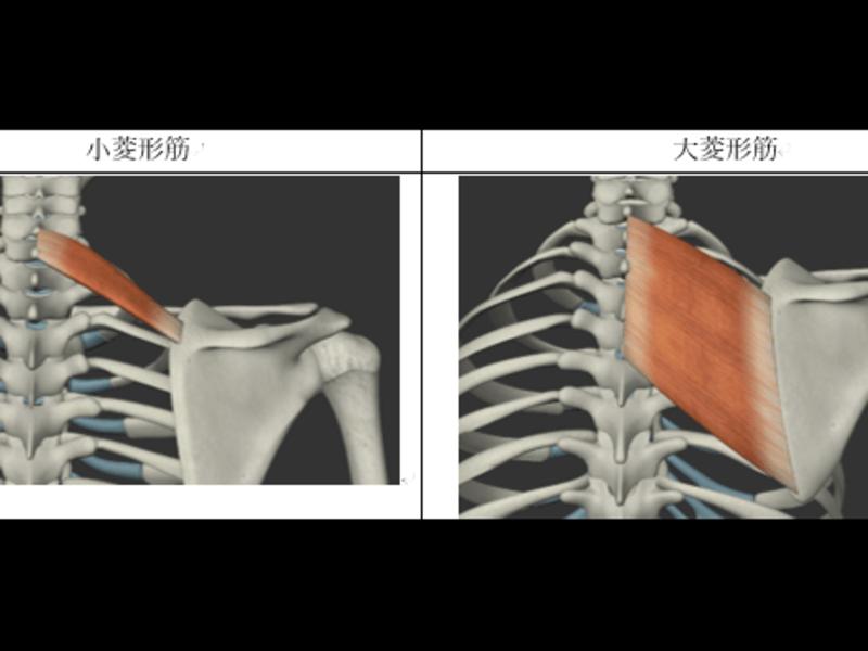 猫背と巻き肩が気になる方へ。立ち姿が美しくなる肩甲骨の作り方!の画像