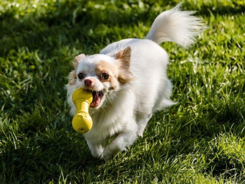 愛犬が7歳を過ぎたら知っておきたい10のことの画像