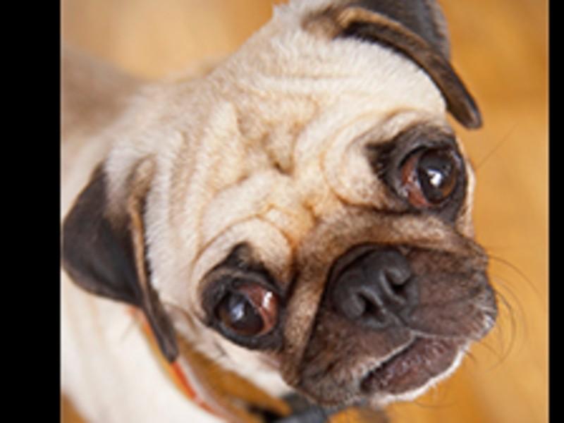 【オンライン開催】勘違いかも?!犬語セミナーの画像