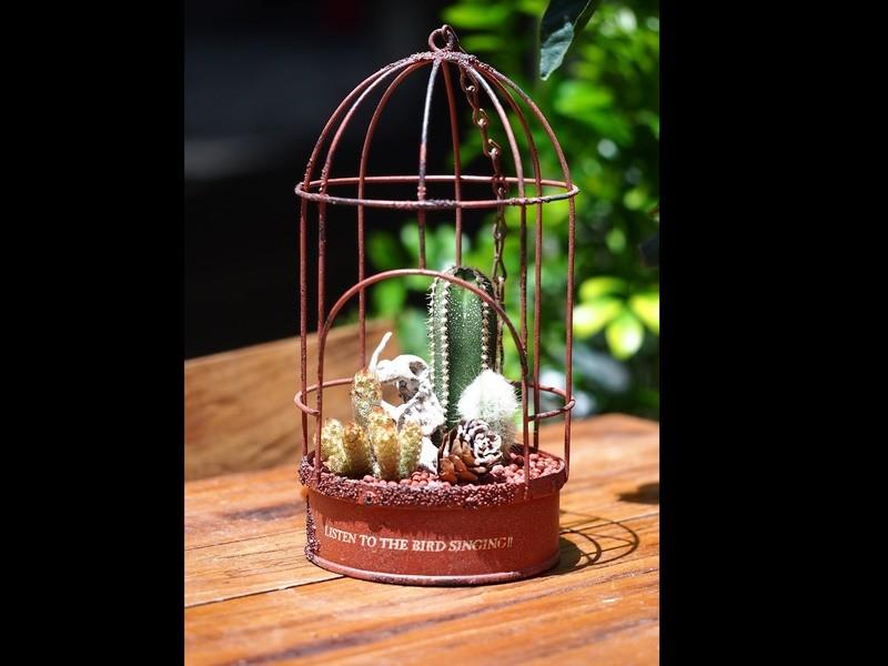 (tukuriba調布店開催)サボテンの鳥かごハンギングの画像