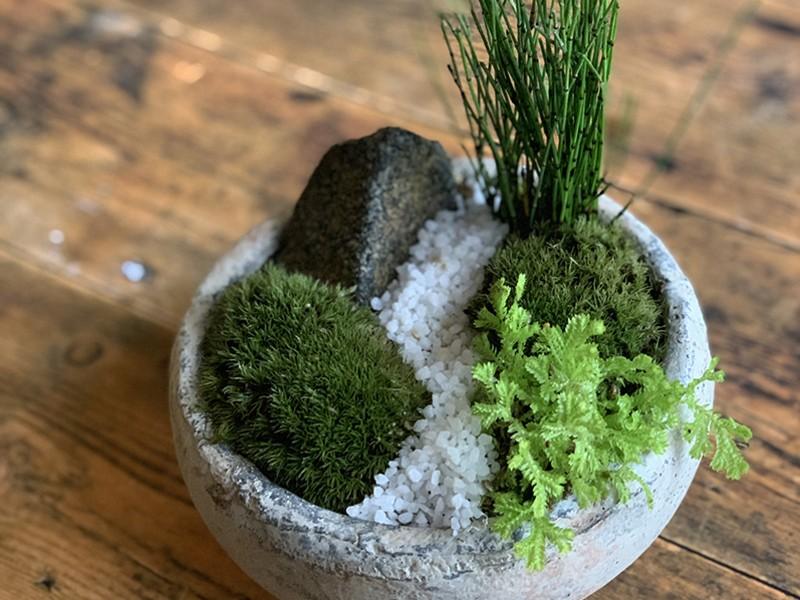 苔盆栽ワークショップ(ヤマゴケと山野草)の画像