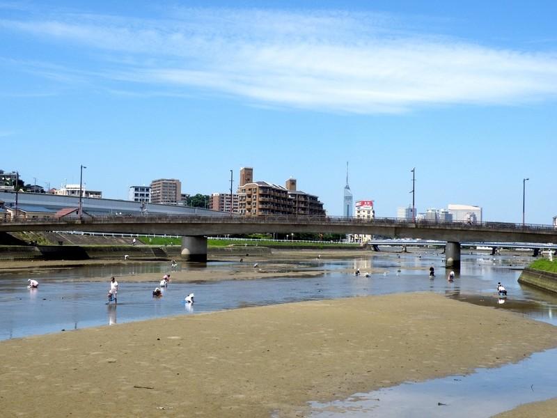 大きなシジミがザクザク採れる!室見川でシジミの潮干狩り体験 6月~の画像