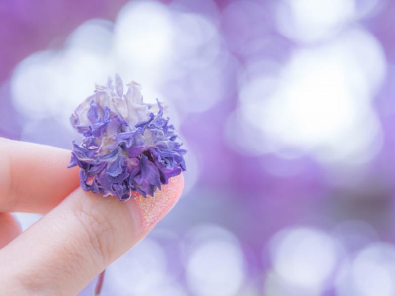 かんたんキレイにオシャレな写真を撮ろう 〜1st step〜 松戸の画像