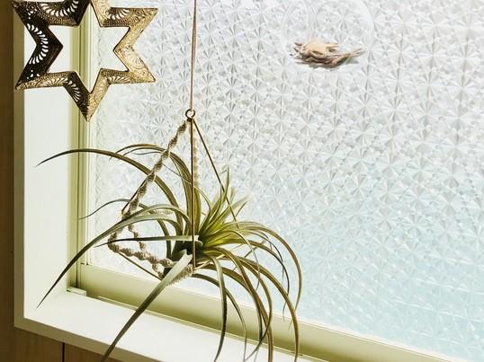 マクラメ編み1種類だけで作るエアープランツハンガーの画像