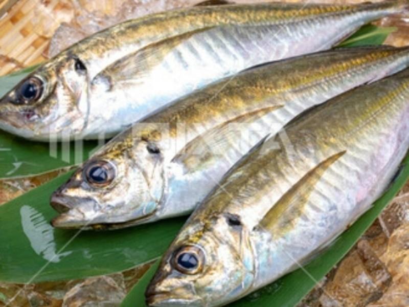 新鮮な魚をさばいてみよう!【大阪編】の画像