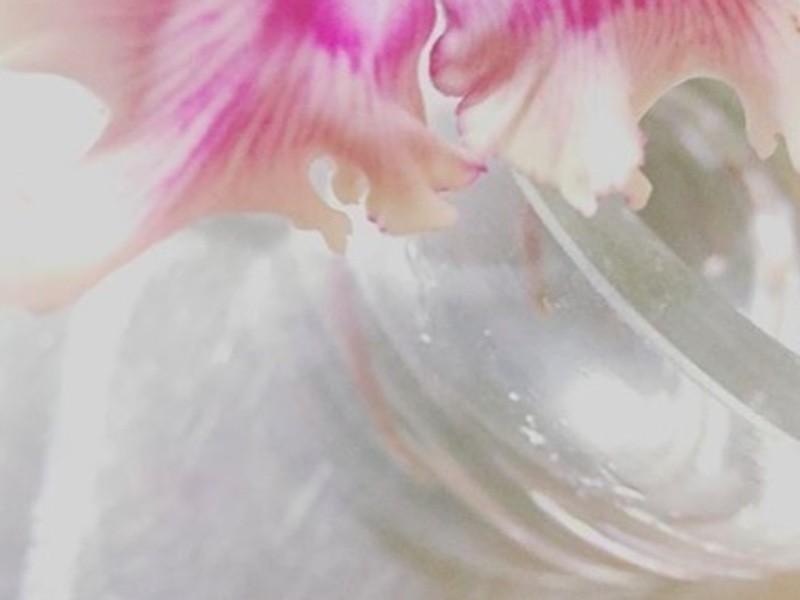 flower lessonの画像