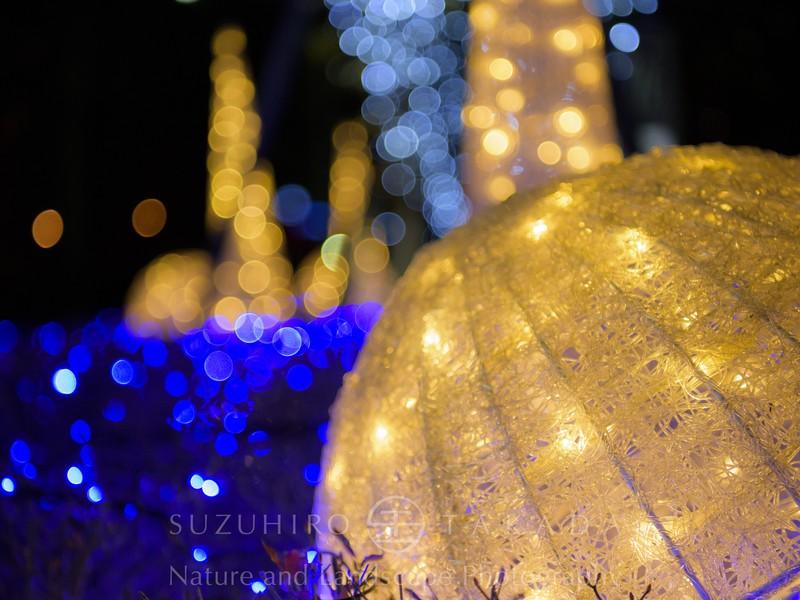 【 季節限定篇 】光に満ちた冬のヨコハマを撮り歩こう!の画像