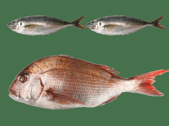 築地豊洲仲買が講師!魚のさばき方講座◆1.5kg鯛1匹+あじ2匹の画像