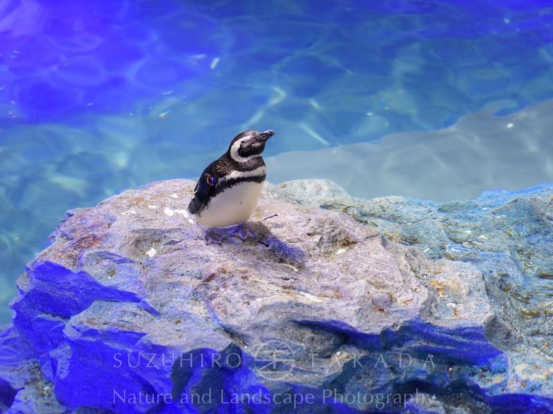 【 動物篇 】水と生きる動物写真を撮ろう!@すみだ水族館の画像